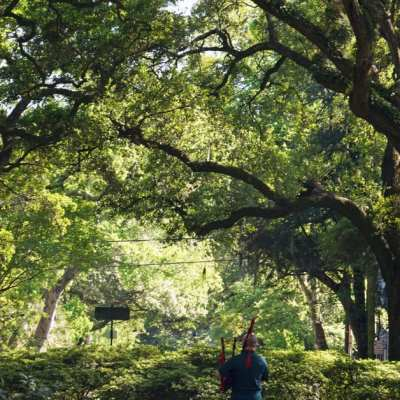 A dance with Live oaks in Savannah
