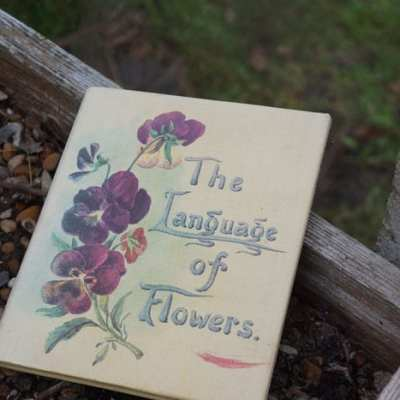 The Language of Flowers – Winter