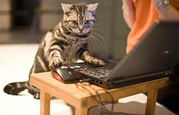 cute-animals-using-computers-wildammo-t (3)