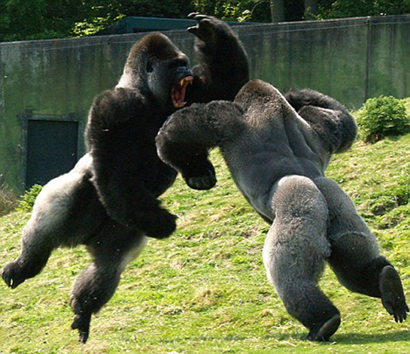 epic-animal-battle-fights-wildammo (5)