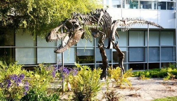 "They have a dinosaur! Yup! A dino's skeleton was found near their building in Mountain View, so Google has erected a giant t-rex skeleton and named it ""Stan"" in its honor. A powerful name for a powerful hunter."