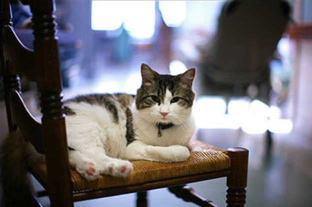 This cat can sense when someone is going to pass away - Oscar was always able to tell when one of the residents in his nursing home was close to death. He would sit with them on their bed during their last moments to comfort them.