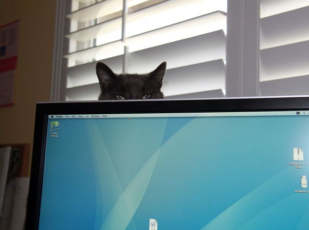 Cats That Have Shown Mastery Of The Ancient Art Of the Ninjas (29)