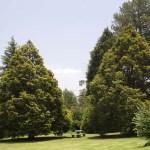Large trees are abundant