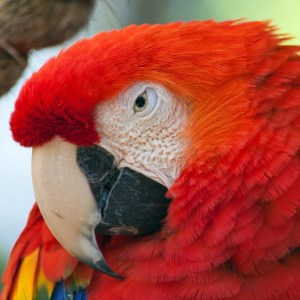 Macaw square