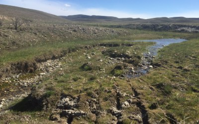 BLM's Soda Fire Rehab Threatens Sage-Grouse, Redband Trout