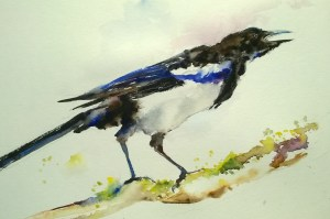 Magpie, w/c, 8″ x 10″, $150 (13″ x 16″ framed)  Matted Print 11″ x 14″, $25  Note Cards 5″ x 7″, $4