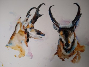 Pronghorn Pair w/c, 11″ x 16″, $200.   Matted Prints 11″ x 14″ $25  Note cards 5″ x 7″ $4
