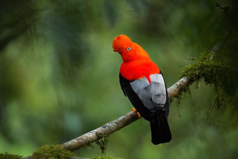 animals in Peru