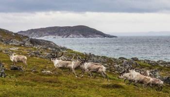 animals in Norway
