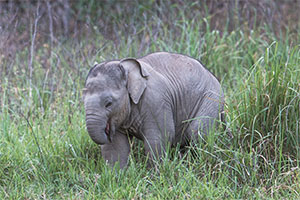 rajaji wildlife tour india