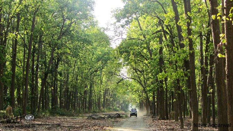 Blog:Trip to Corbett - A nature's tale