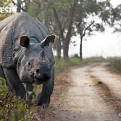 one-horned rhinoceros at Kaziranga National Park