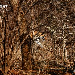 tiger under bushes at ranthambore national park