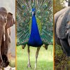 wildlife photography tours in india