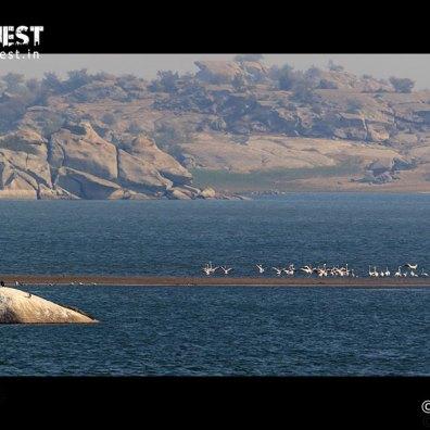 Sample Bird Photography at Jawai Dam Bera