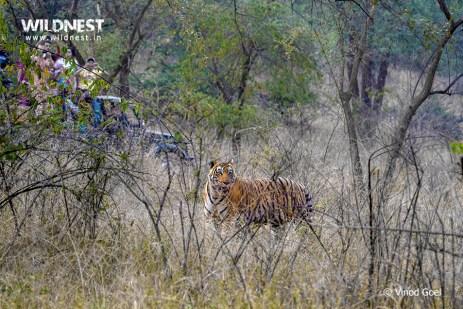 Jeep Safari at Sariska Tiger Reserve