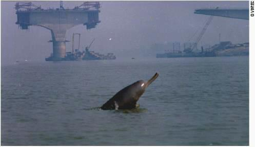 dolphin endangered animals in Indian wildlife