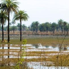 Different Migratory Birds Birds at Surajpur Wetlands Greater Noida