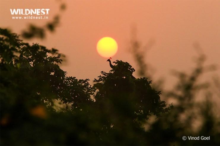 Birding near Delhi at Tilpat Valley