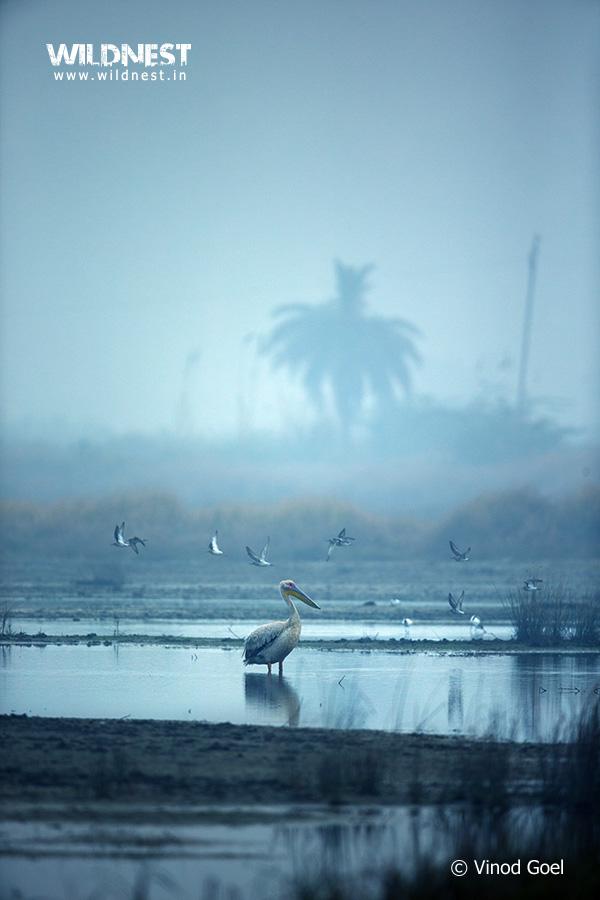 Birding Near Delhi at KG Wetlands