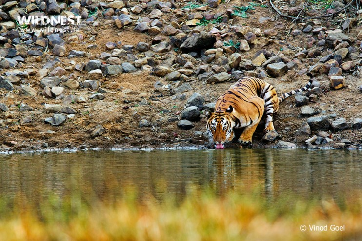 Wildlife of Central India