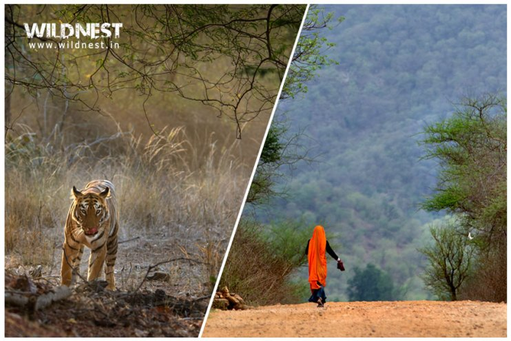 Culture and Wildlife Tour in India