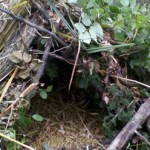 Wilderness Survival Debris Hut