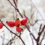 Wild Rose Hip Trail Mix