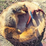 How To Field Dress a Squirrel – an article by Creek Stewart on ArtofManliness.com