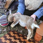 How to Field Dress & Butcher a Rabbit