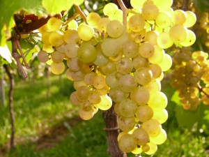 grapes-271901_1280