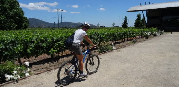 Bike and wine in the Colchagua Valley