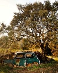 La Vinyeta Winery Girona, Spain - Car Under Tree in Vineyard