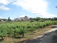 Wine tourism in Spain