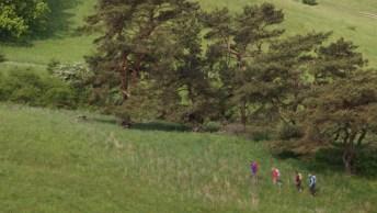 Wanderweg_Zicker_Berge_Ruegen