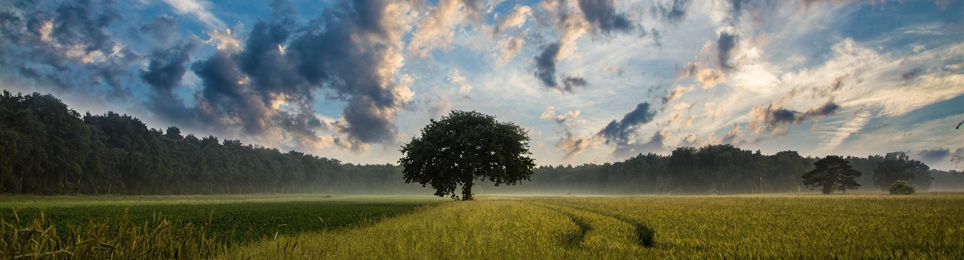 tree-247122-e1457495787585