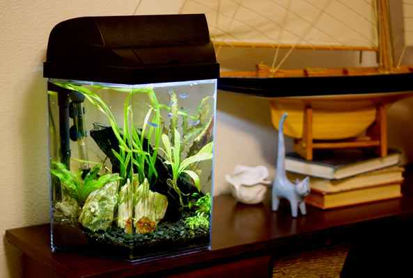 So, how big do you think this aquarium is in gallons? (Read on for