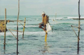 A Sri Lankan pole fisherman