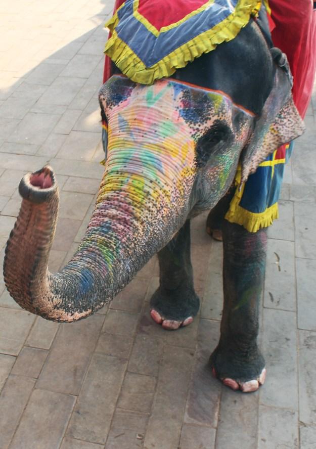 Indian Elephant // www.WithTheGrains.com