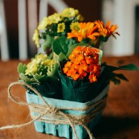 A Memorial + What To Do with Farmer's Market Fruit Baskets