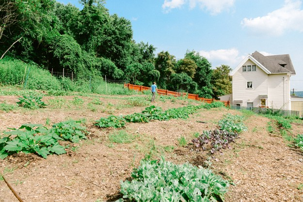 Hazelwood Urban Farms in July