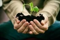 Garden Seedling