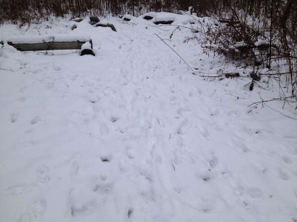 Animal tracks on a path