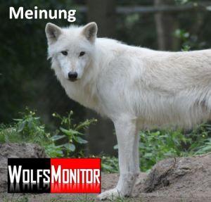 Polarwolf im Wildpark Lüneburg (Foto: Vogler)