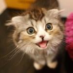 海外「日本人は『ペットにはポケモンが見えている』と信じているらしい」