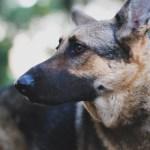 韓国最大の犬肉流通市場で犬肉販売を禁止…海外の反応