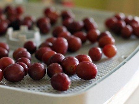 DIY Raisins: Dehydrator Trays