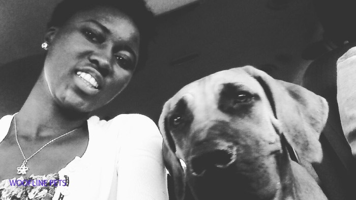Boerboel, car ride