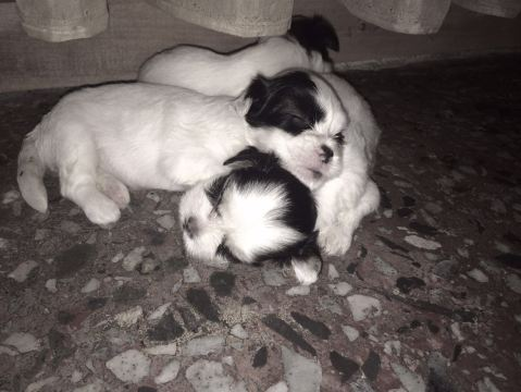 woofline pets puppies